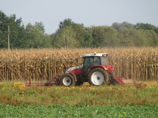 Windrowing pumpkins with STEYR 9105